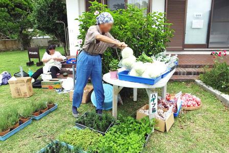 野菜とハーブ苗販売