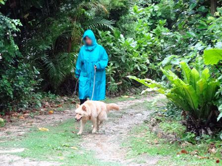 雨合羽で散歩