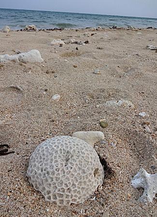 DSC06820 - サンゴ