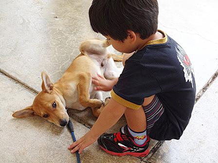 DSC07616 - 子犬