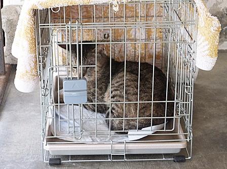 DSCF8371 - 成猫さん