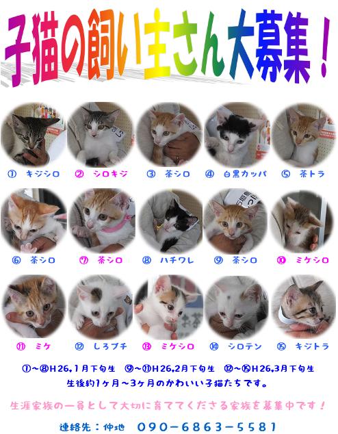 15子猫の募集チラシ - コピー