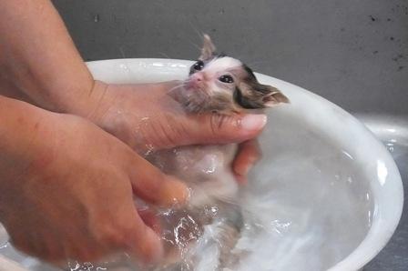 あずき入浴