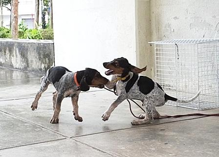 DSCF9722 - 2子犬