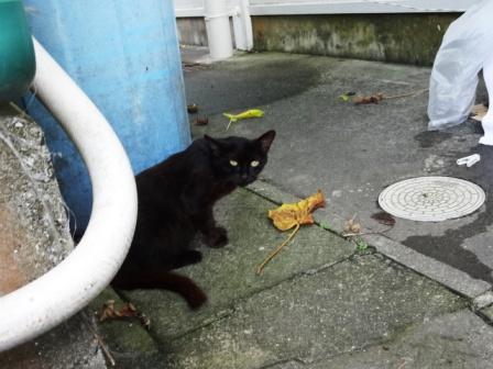 DSC08593 - 母猫