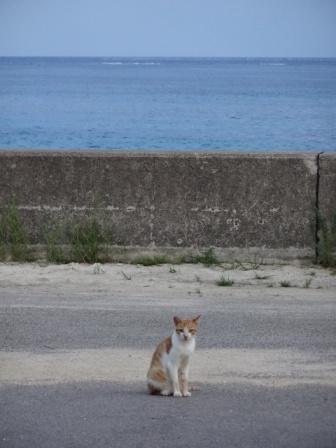 DSC09136 - 猫島