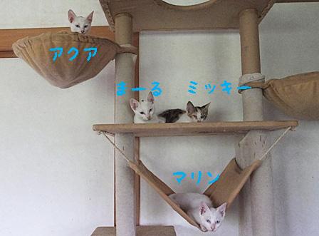 DSCF0912 - 子猫のコピー