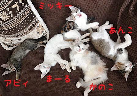 DSC09987 - かしまし子猫