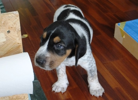 DSCF7838 - 子犬