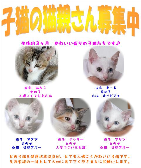子猫(あんこマールアクアマリンミッキー)