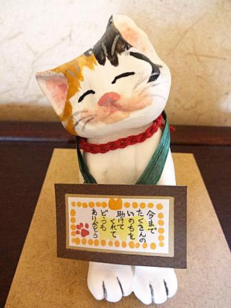 DSC00950 - 三毛猫