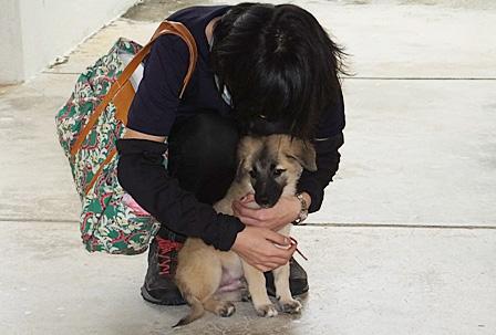 DSCF3576 - 子犬トライアル