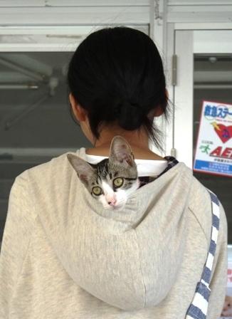 DSCF3711 - 参加猫
