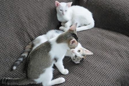 3子猫 in 8月23日