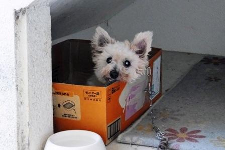 チャロン in Box