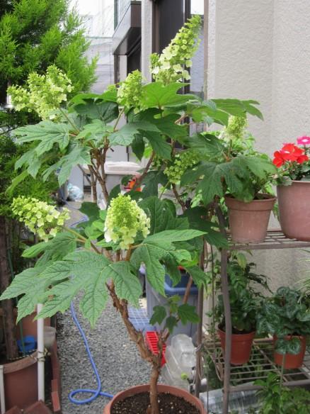 26.05.25家庭菜園 074_ks
