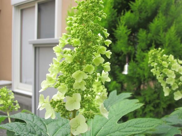 26.05.25家庭菜園 072_ks