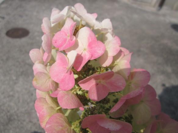 26.06.19家庭菜園 101_ks
