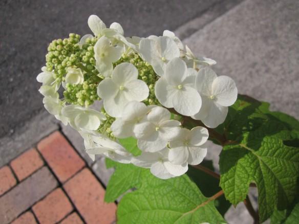 26.06.19家庭菜園 099_ks