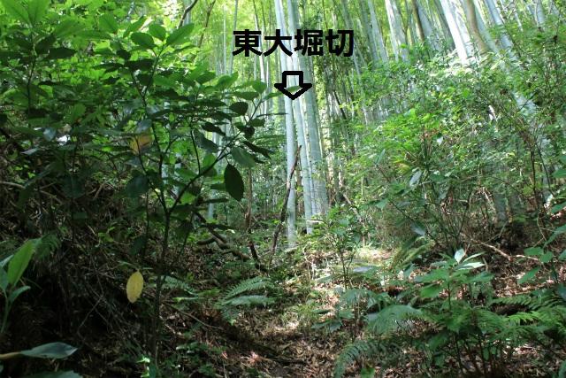 IMG_6983.jpg