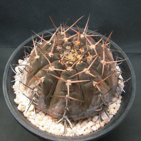 Sany0216--riojense v guasayanense--VS 138--Mesa seed 484.625