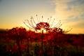 陽を抱く花