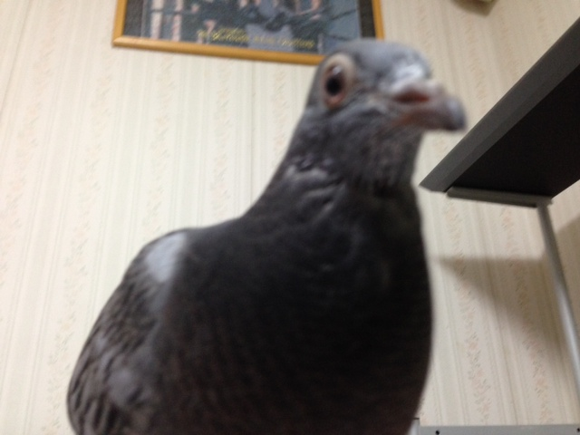 hato-0621-03.jpg