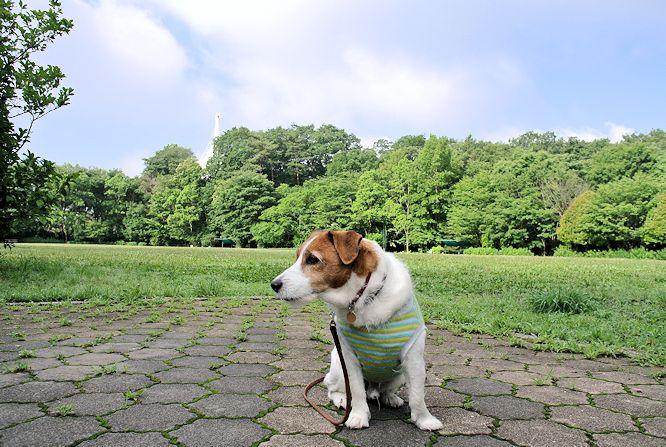 2014長岡公園558
