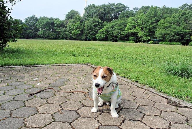 2014長岡公園590