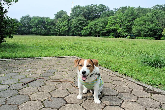 2014長岡公園591