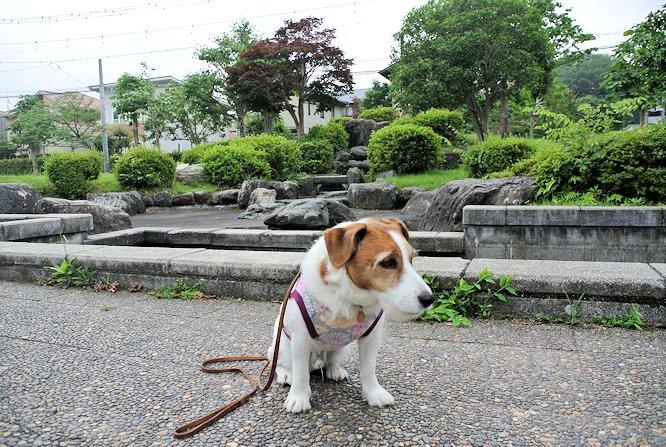 2014散歩044