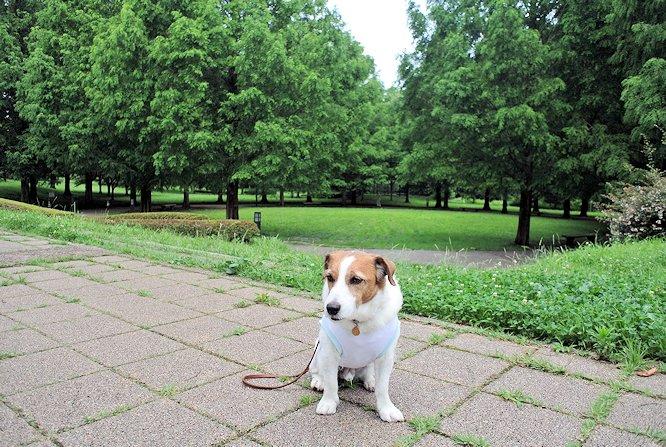 2014長岡公園679