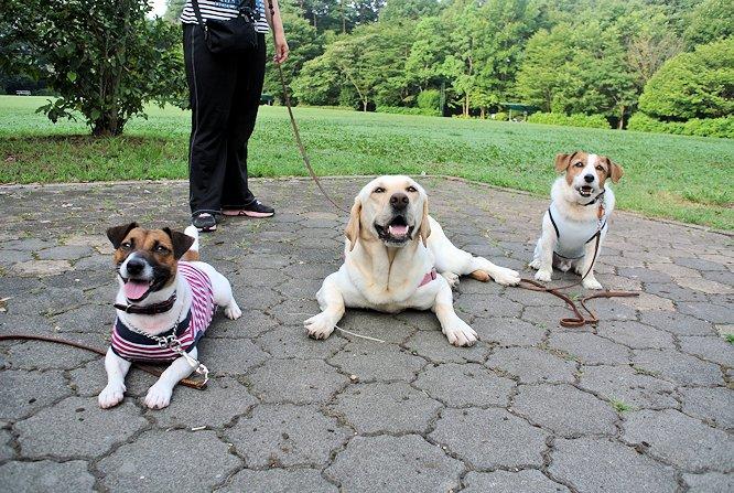 2014長岡公園794