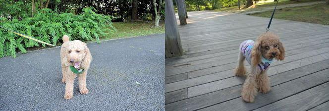 2014長岡公園823