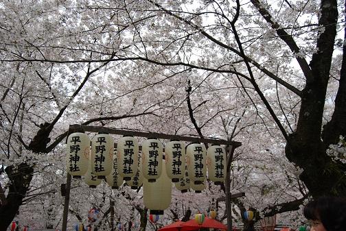平野神社2014 105