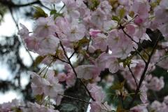 ★平野神社2014 058