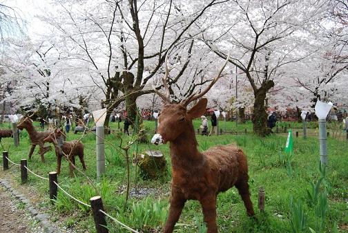 平野神社2014 075