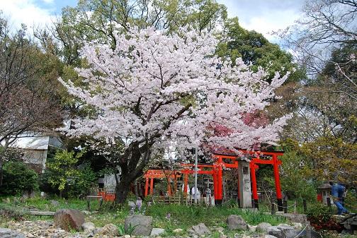 ★平野神社2014 070