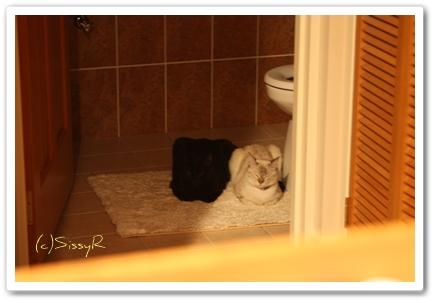 kitties0826a.jpg