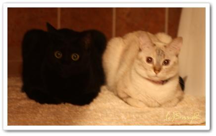kitties0826b.jpg