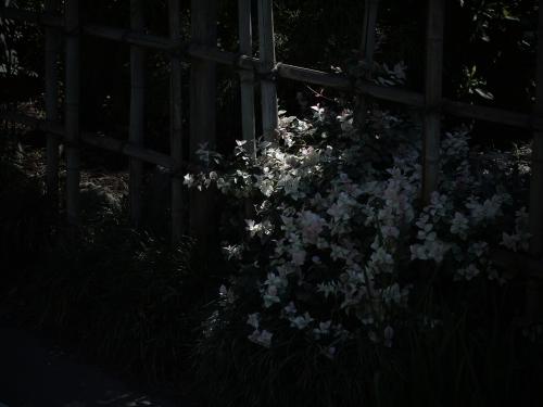 14090219c_R.jpg