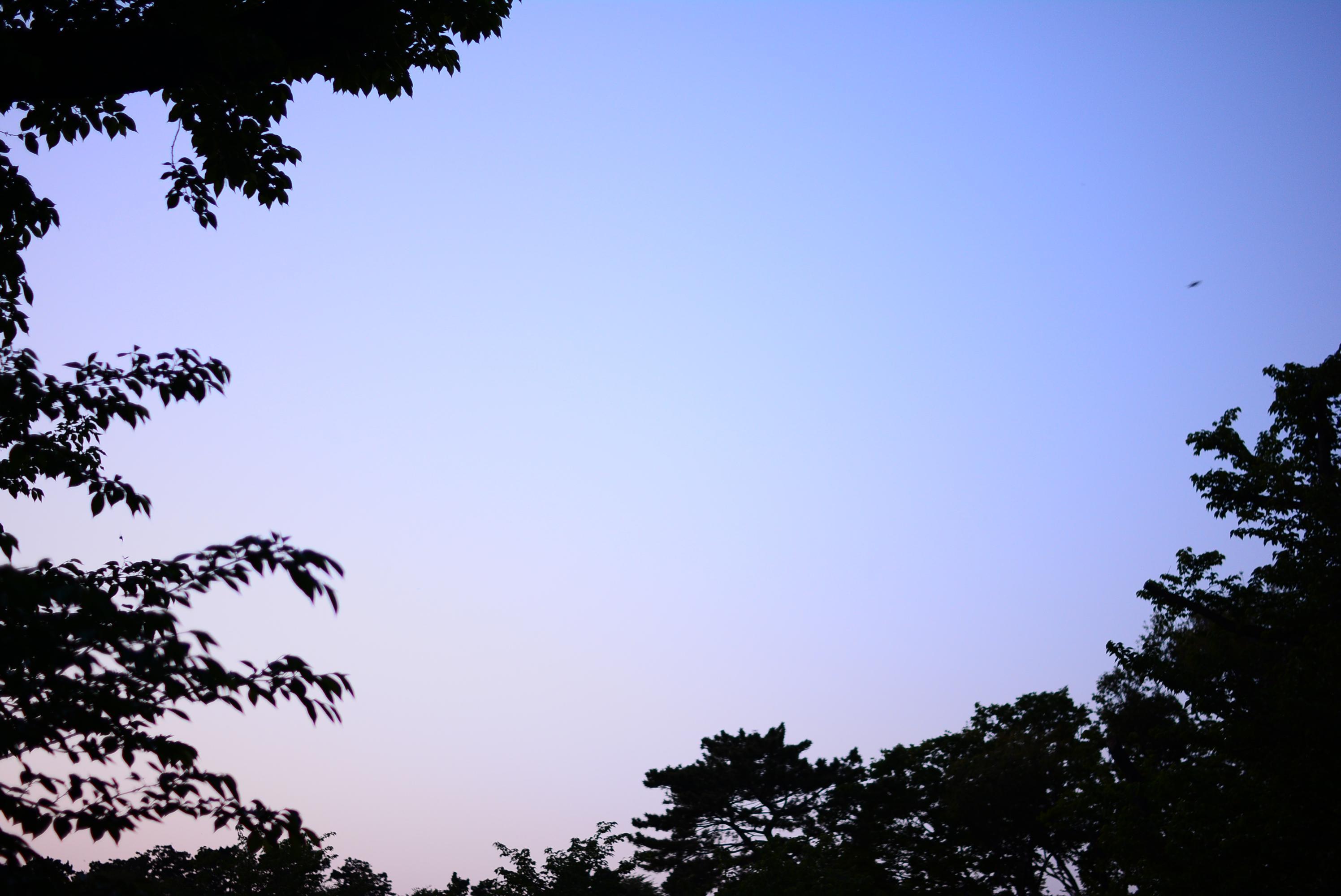 変換 ~ DSC_0228