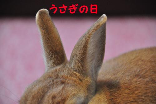 DSC_5260-1.jpg