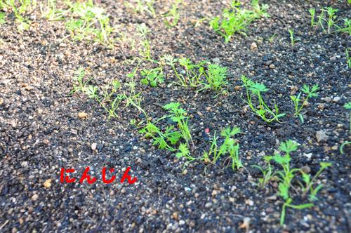 DSC_5706-1_2014090921420470d.jpg
