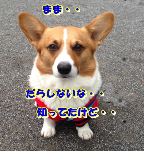 IMG_3028_201402202237447d2.jpg