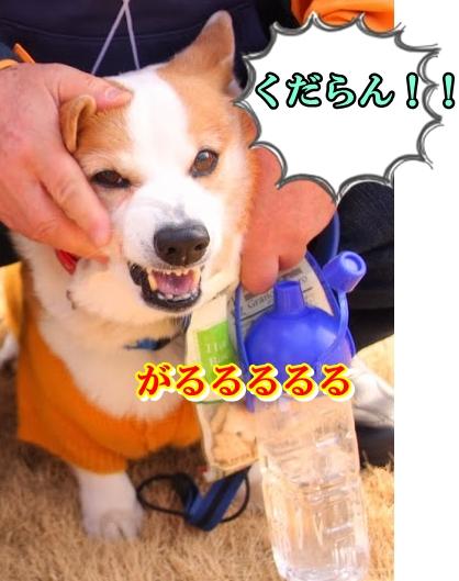 IMG_9276.jpg