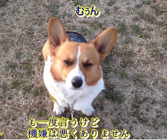 IMG_9546_2014022400181047c.jpg