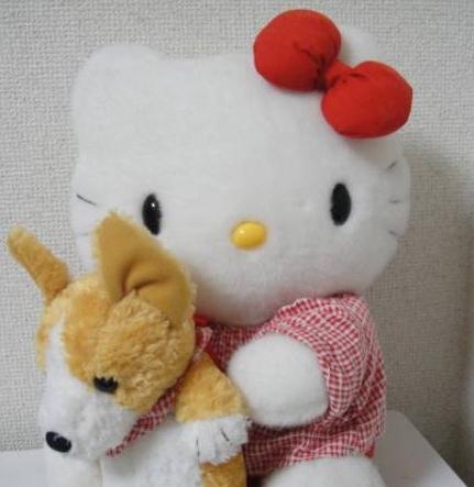 whitecolorflower-img600x450-1393490674jd6bqb30997.jpg