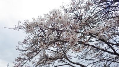 20140331_j吉香公園にて_WG3GPS (4 - 6)