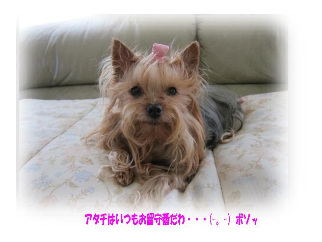IMG_0225a.jpg